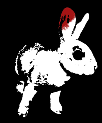 White Rabbit Red Rabbit Ithaca